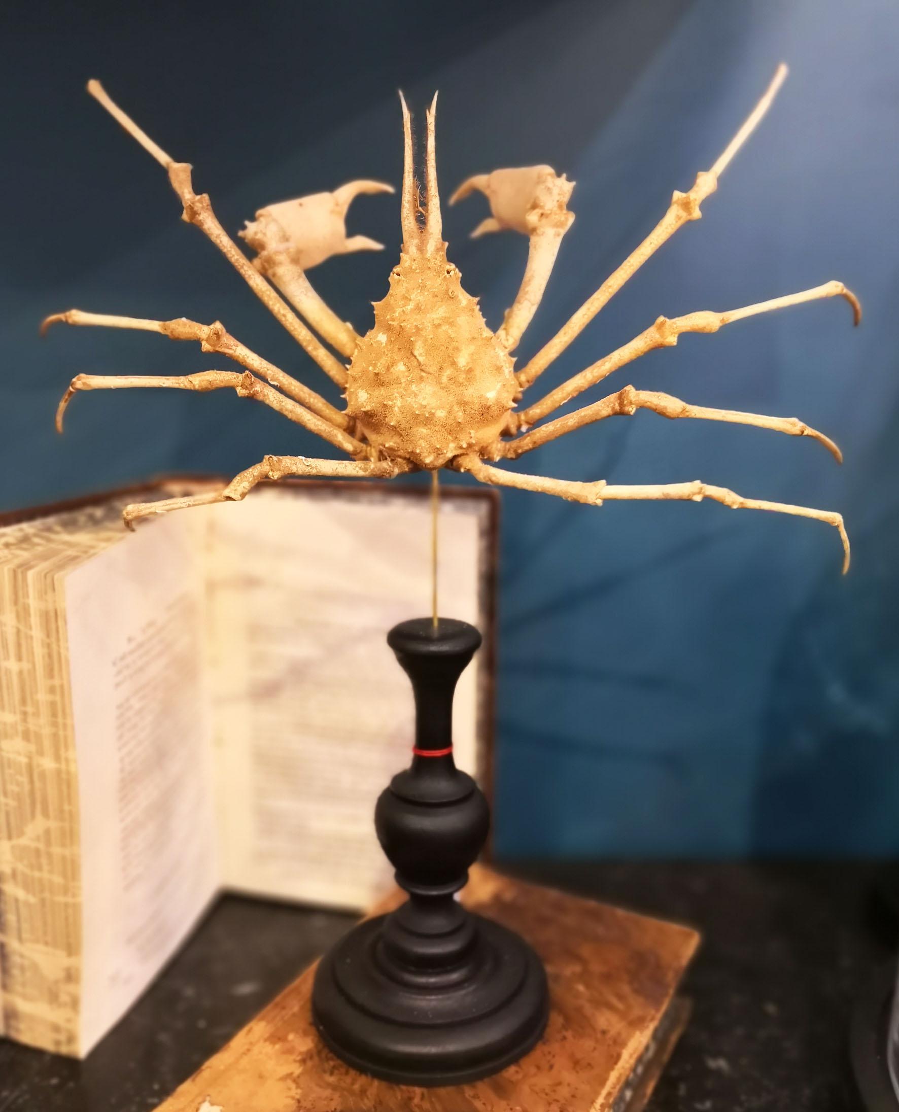 Rare Crabe